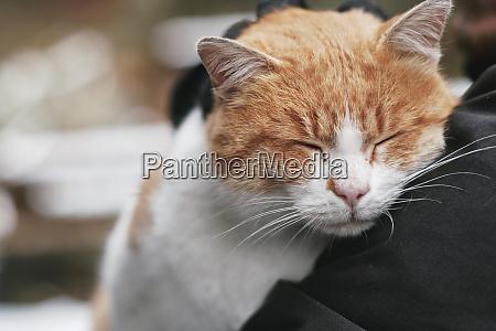 portraet der katze entspannung mit kopf