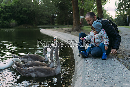 baby girl and father feeding swans