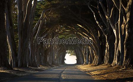 usa california inverness treelined road in