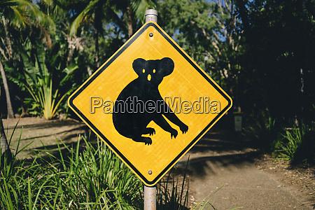 australien magnetic island koala animal crossing
