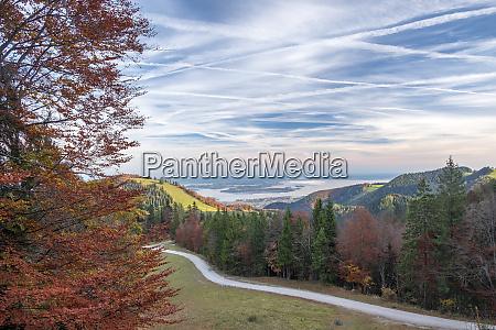 germany upper bavaria aschau autumn forest