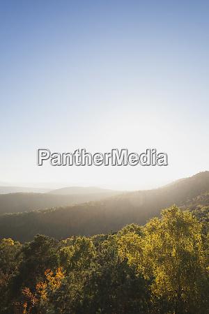 germany rhineland palatinate pfalz palatinate forest