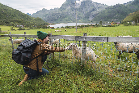 young man with backpack petting sheep