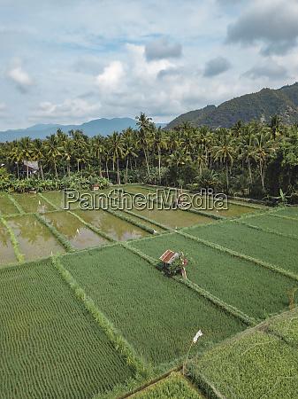 indonesien bali candidasa luftaufnahme der reisfelder