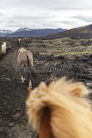 island hochland von island landmannalaugar reiten