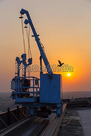 indien delhi neu delhi kran vogel