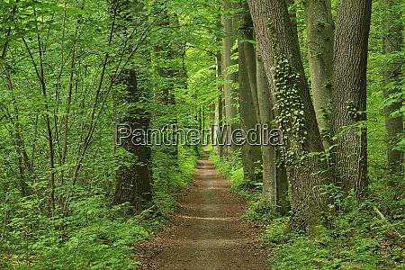footpath through forest in spring bavaria