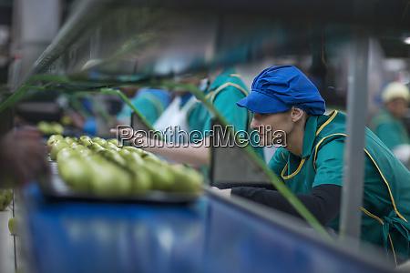 women working in apple factory