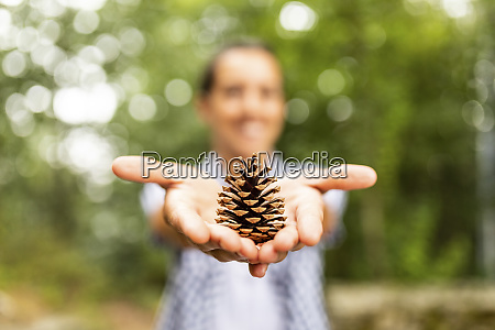 pine cone in hands of a