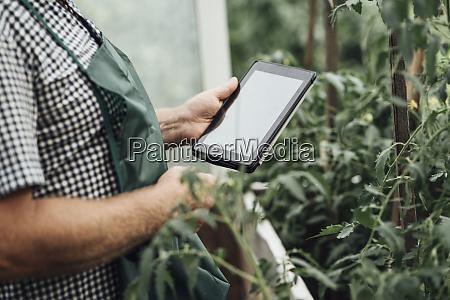 gardener in garden using tablet