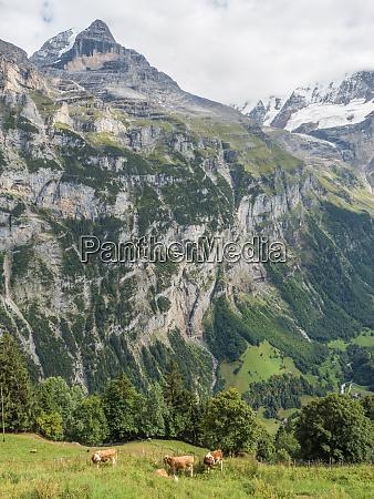 swiss, alps, , mountain, scene, , switzerland, , europe - 26430841