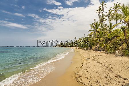 a view of a beach jungle