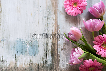 rosa blumen auf altem grauem holz