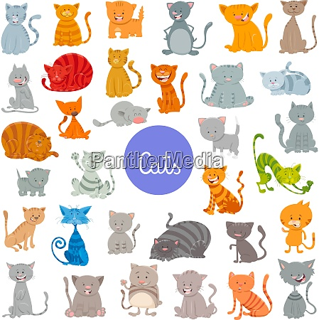 funny cat and kitten characters large
