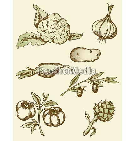 vector hand drawn vintage vegetables