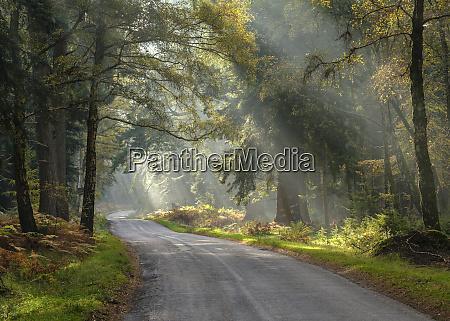 sonnenstrahlen sichtbar in einem hellen nebel