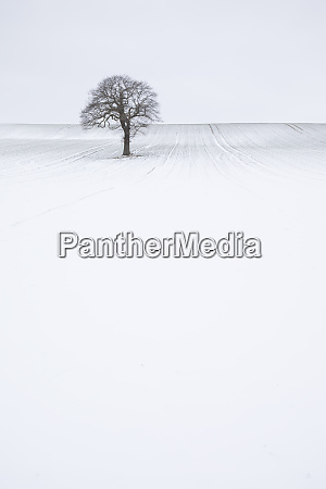 lone solitary tree in winter snow