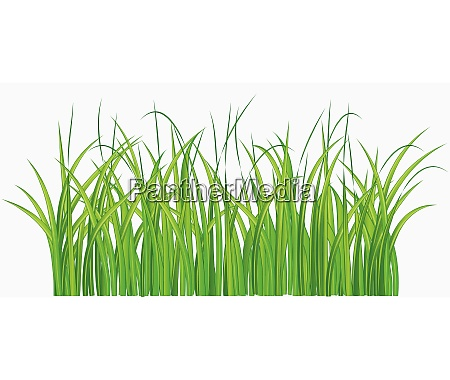 vector illustration of straight forward green