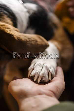 frau haelt pfote von hund nahaufnahme