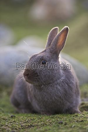 kaninchenportraet auf gras