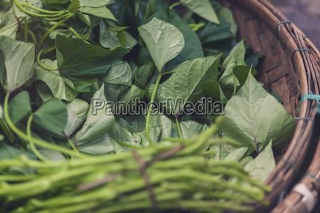 vietnam fresh vegetables and herbs in