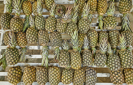 brazil pineapples on a market