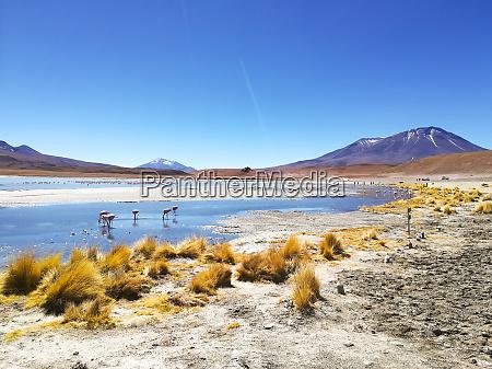 laguna hedionda view bolivien