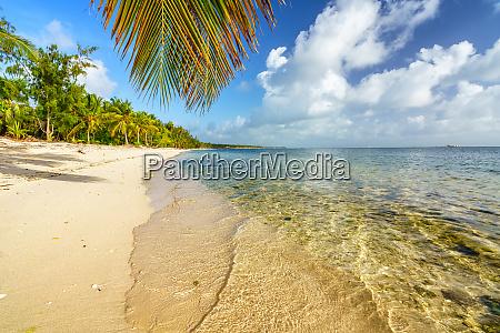 palmenblatt ueber meerwasser am tropischen strand