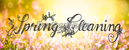 sunny erica flower field calligraphy spring