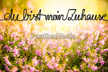 erica flower field calligraphy zuhause means