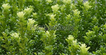 green plant tree