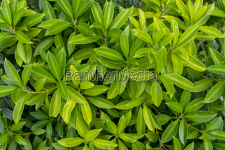 top view of green plant