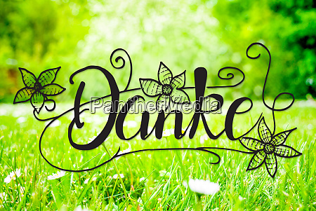 spring meadow daisy calligraphy danke means