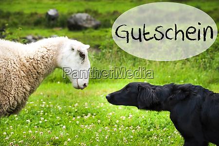 dog meets sheep german word gutschein