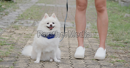 schoene pommersche hund im freien