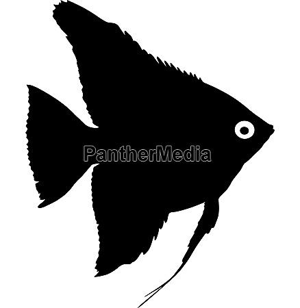 black silhouette of aquarium fish on