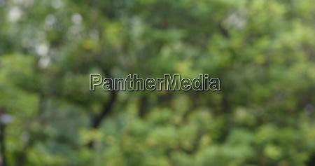 blur of green plant