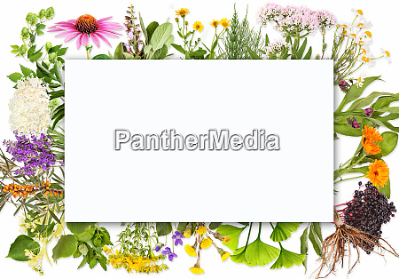 blank label with medical plants