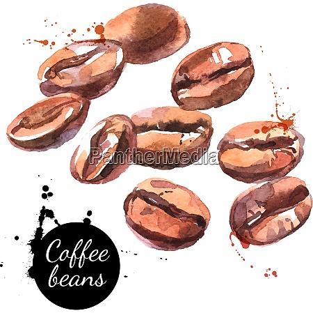 aquarell handgezeichnete kaffeebohnen isolierte natuerliche lebensmittelvektor