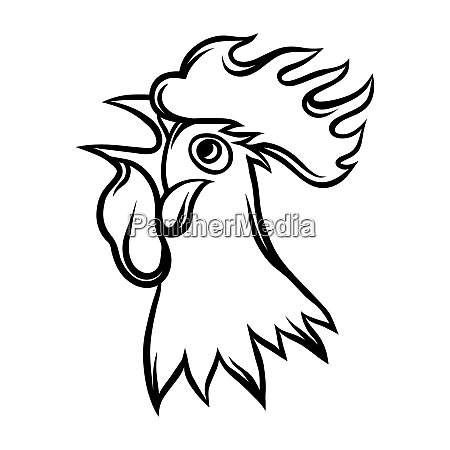 hand drawn illustration of black rooster