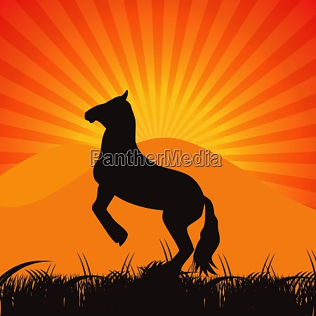 black horse silhouette vector illustration eps10