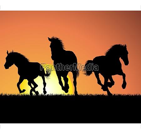 pferdesilhouette auf sonnenuntergang vector illustration