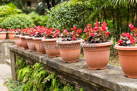 flower pot in the garden