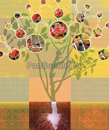 analyse der molekularen struktur der pflanze