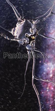 computergeneriertes transluzentes neuron