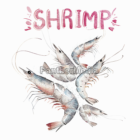 watercolour painting of fresh shrimps