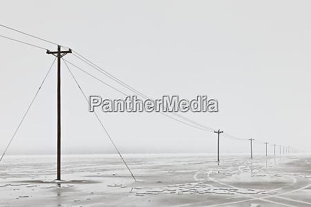 telephone poles in bleak winter landscape