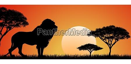 grosser afrikanischer loewe