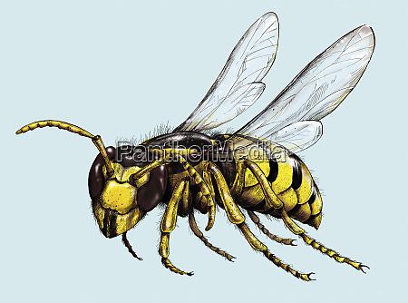abbildung von wespe im flug