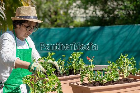 seniorin topf geranienblumen im freien